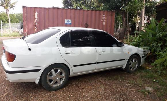 Buy Used Nissan Primera Other Car in Laiagam in Enga